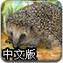照顾小刺猬中文版