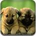 双胞胎狗狗拼图