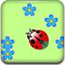 瓢虫和花朵