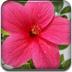 测测你是哪朵花