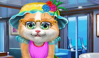 猫咪的护理和美容
