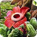魅惑的花儿