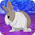 救援小白兔