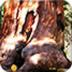 巨型红杉丛林逃脱