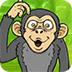 救援混乱的猴子